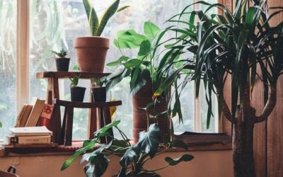 Caring For Your Potted Plants